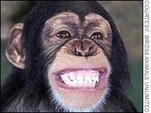 monkey.03.jpg